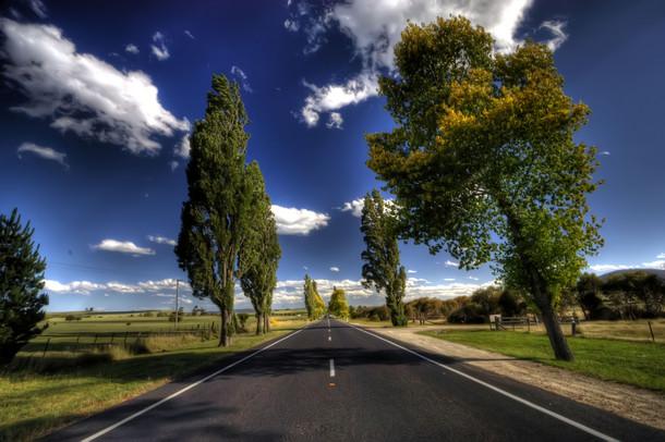Route-arbre_billet